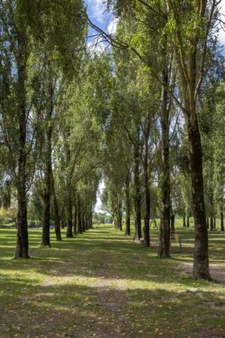 Allée d'arbres du communal de Chaniers (17)